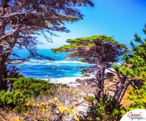 Trecho da 17 mile drive entre Monterey e Carmel.