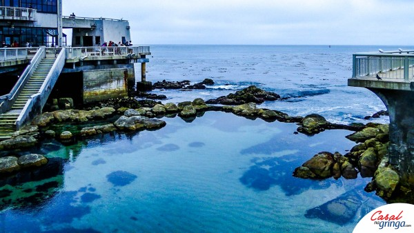 Piscina Natural localizada no Monterey Bay Aquarium