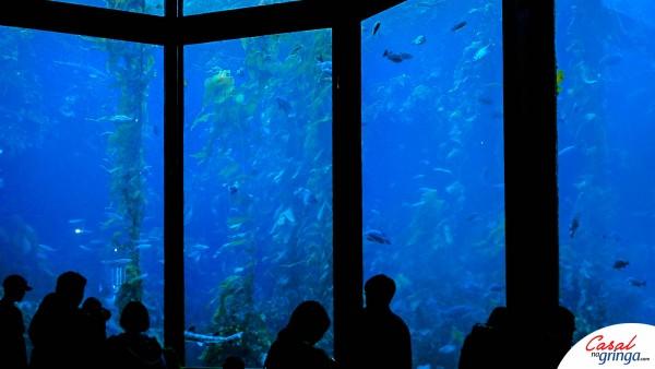 Um dos gigantescos aquários que você vai encontrar
