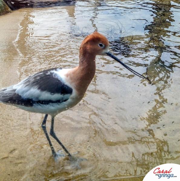 Uma das espécies de Aves criadas no local