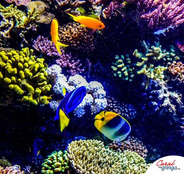 Lindos peixes marinhos