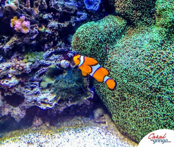 O Nemo não poderia faltar rsrs
