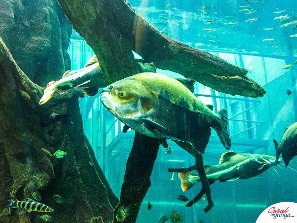 Um dos aquários do Museu