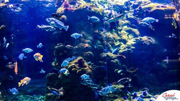 Lindos peixinhos!!