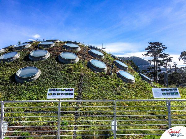 O teto do Museu é ecológico! Super legal!